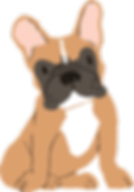 French_bull-dog-brown.png