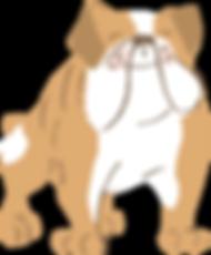 Bull_dog_brown.png