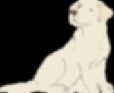 Labrador_cream.png