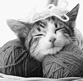 bigstock_Cat_Playing_With_Yarn_8204098_e