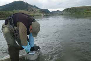 Macroinvertebrate community collected with the Hess sampler in the Missouri River near Wolf Creek.