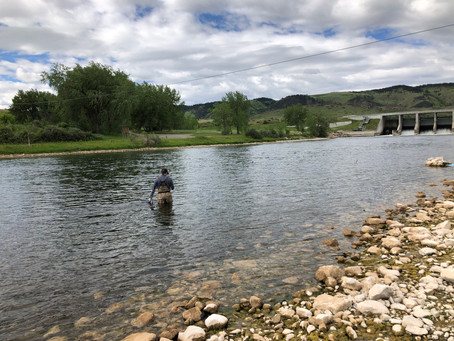 June River Flow Update