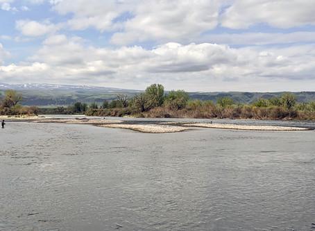 May Bighorn River Flow Update