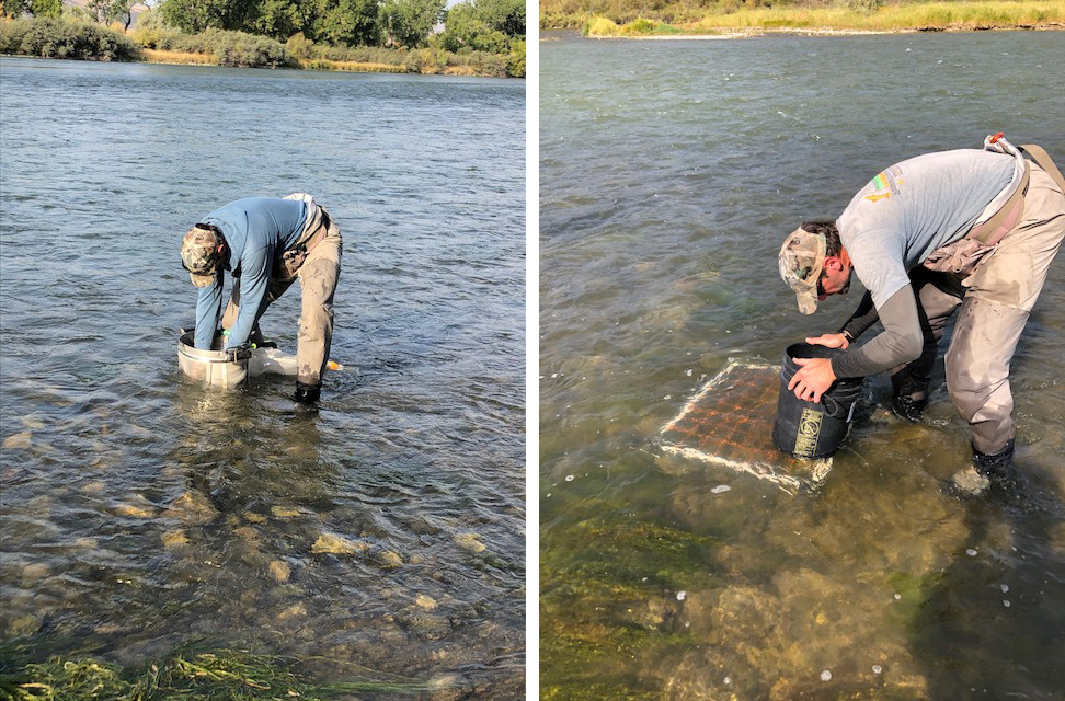 Figure 2: Hess macroinvertebrate sample being taken at Split Island (L) and fine sediment grid count at Bighorn FAS (R).