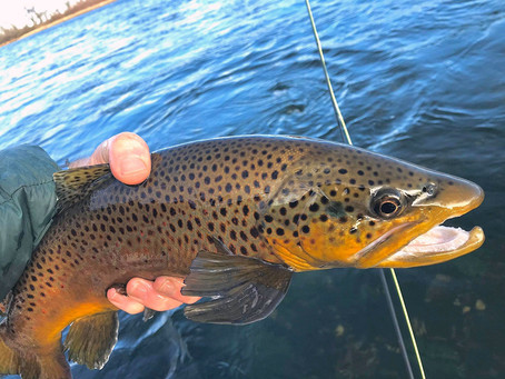 January Fishing Update for the Bighorn River