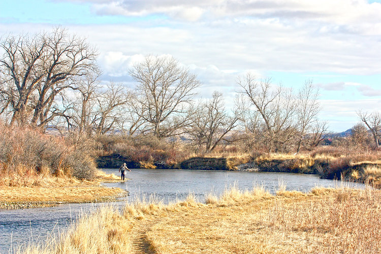 Angler on the Bighorn River