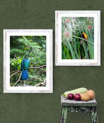 Canvy_birds.jpg