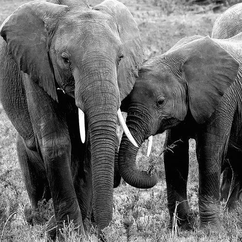 """Elephants, chilling"", Kenya (by Ulrike Nordquist)"