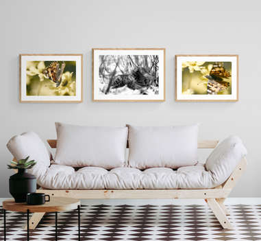 CatButterflies_whitewall_IA.jpg