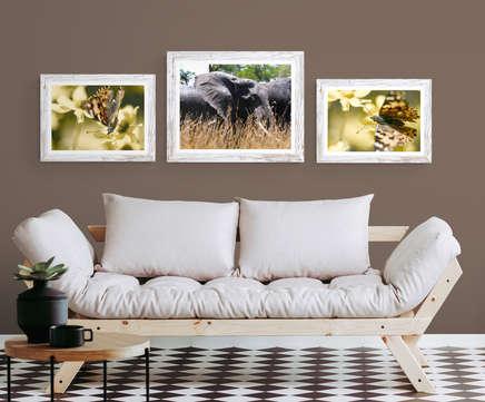 ElephantButterflies_brownwall-IA.jpg