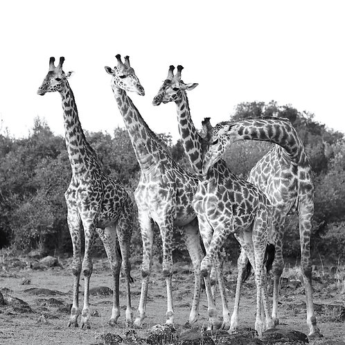 """Four Friends Chatting"", Kenya"