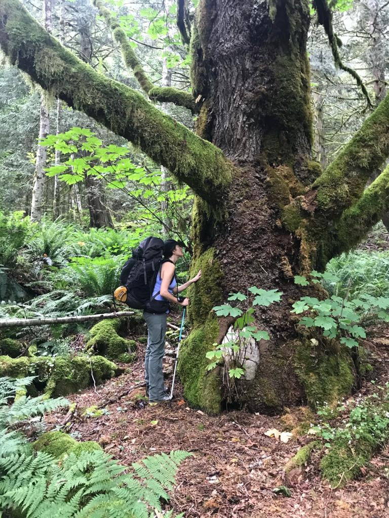 Self Guided Forest Bathing