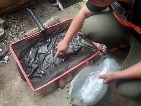 Mustahik Binaan LAZISNA Kembangkan Budi Daya Ikan Lele di Tengah Pandemi