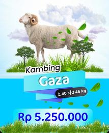 kambing gaza.png
