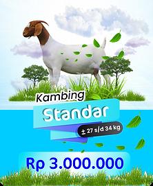 kambing standar.png