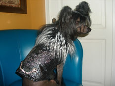 RL Couture dog faux fur coat