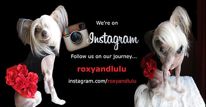 Roxy and Lulu on Instagram