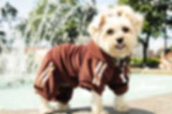 Roxy and LuLu - Dog Velvet Tracksuit