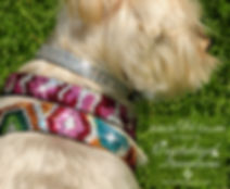 Roxy and LuLu - Urban Jungle Swarovski Dog collars