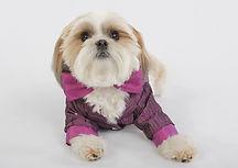 RL Couture dog tuxedo