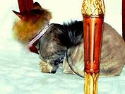 Roxy and LuLu Swarovski Crystal Cat Collar
