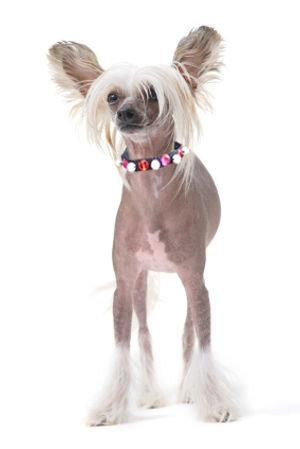 roxy and lulu - citrus & mint dog collar
