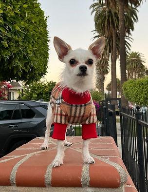 zelda_instagram_burberry_sweater-2_edited.jpg