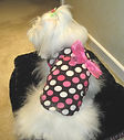 Roxy and LuLu pink polkadot dog tee