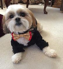 Kalo in Lucy Medeiros Black velvet tuxedo