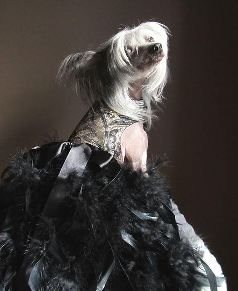 Baroque-Gown.jpg