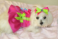 RL Couture Pink Dog Harness Dress