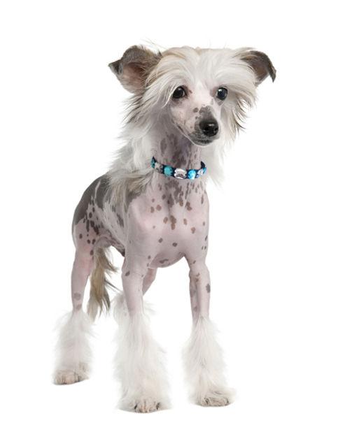 Roxy and Lulu - Cotton Candy Dog Collar