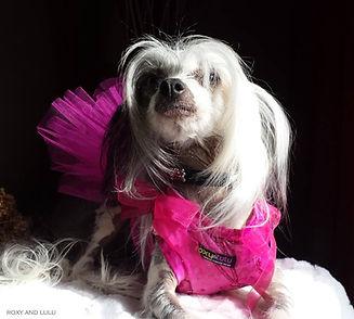 roxy and lulu pink diamond.jpg