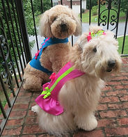 RL Couture Dog harnesses