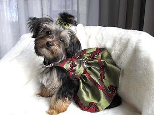 emma_emma dress.jpg