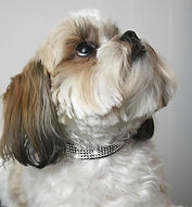 Roxy and LuLu Swarovski Crtsyal Dog Collar