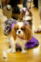 Pet Fashion Week NYC - RL Couture by Lucy Medeiros
