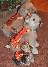 RL Couture Tangerine Dog Harness