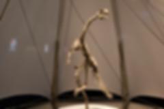 DINOLAB恐龍實驗室-20.jpg