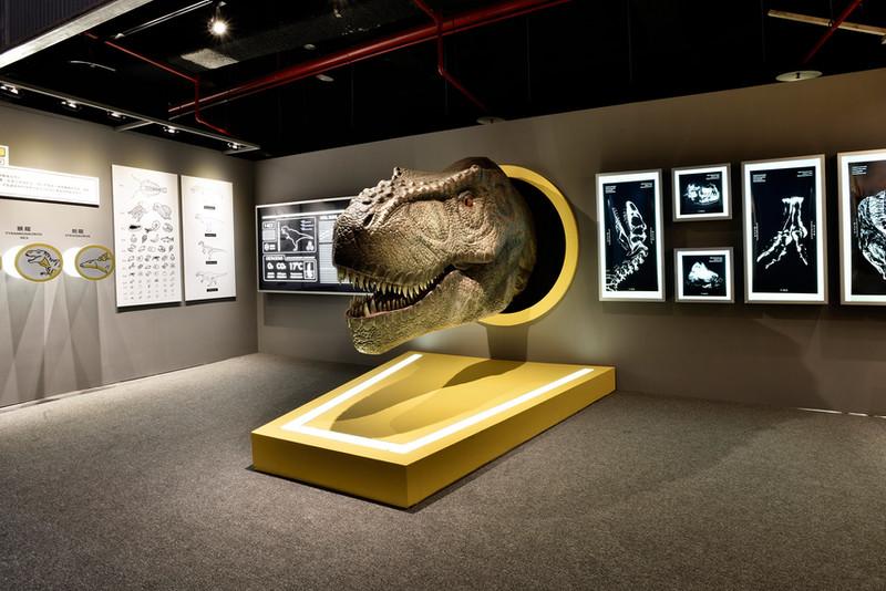 DINOLAB恐龍實驗室-13.jpg