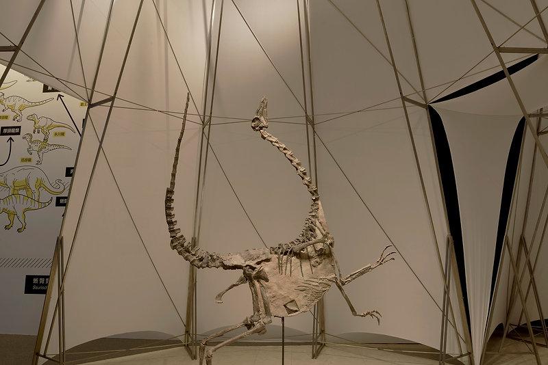 DINOLAB恐龍實驗室-09.jpg