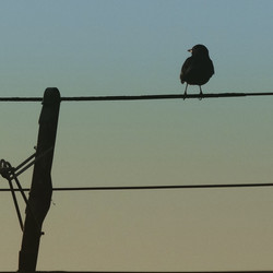Bird on a Wire - 70's style