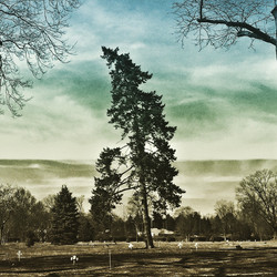 DR. SUESS TREE