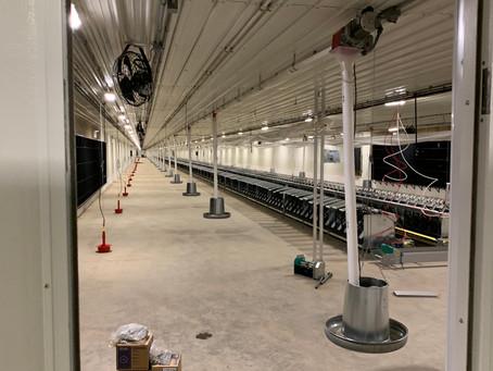 Hendrix Genetics Layer Barn | Update