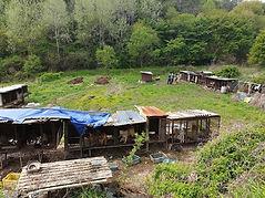 1st farm pic.jpg