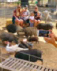 Visit our mini pig farm
