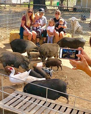 Visit our mini pig farm