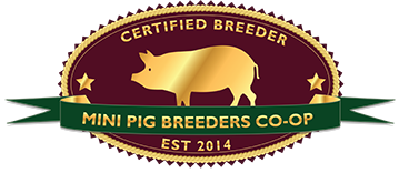 teacup pig breeder california