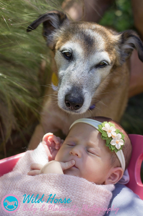 Newborn with pets photo session san diego