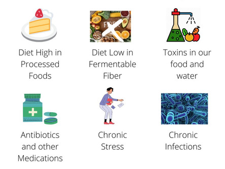 6 Reasons for a Disrupted Microbiome